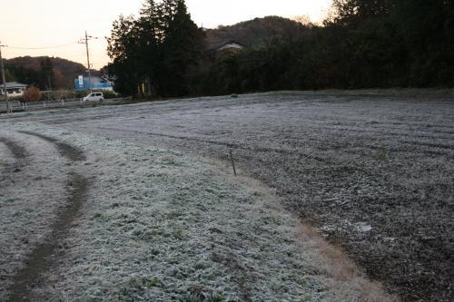 田んぽの霜