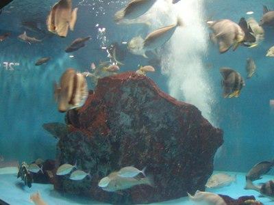 長崎ペンギン水族館 (14)