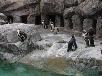 長崎ペンギン水族館 (4)