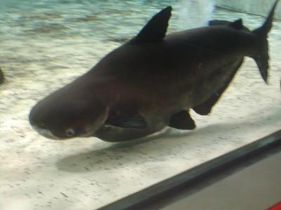 長崎ペンギン水族館 (35)