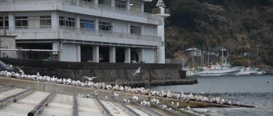後ろは島しょ農林水産センター(水産試験場)