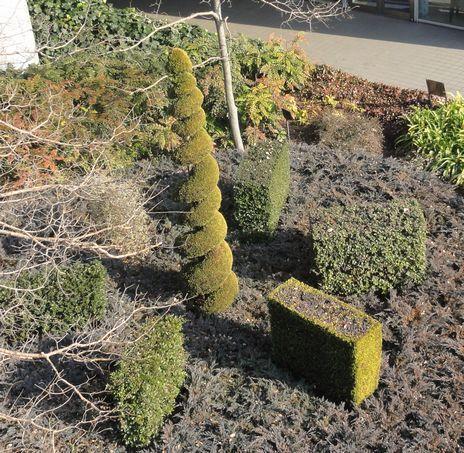 東京ビッグサイトの植物