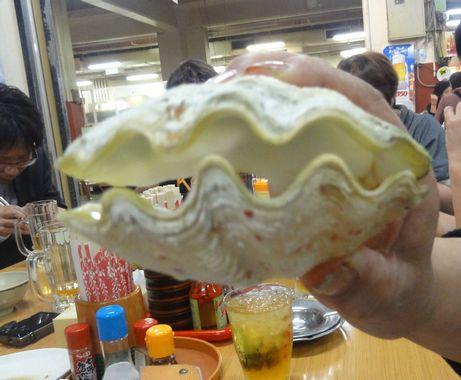 きれいな貝
