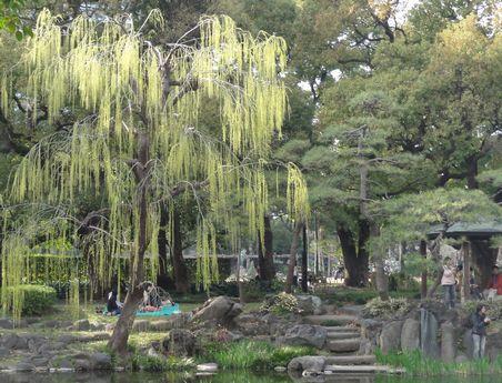 日比谷公園の新緑