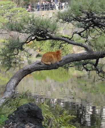 樹の上に猫が