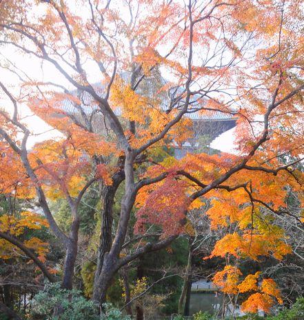 夕日と紅葉と東大寺