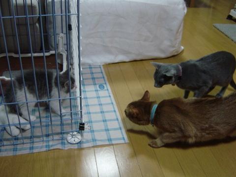 ごたーいめーん!(2009.01.05)