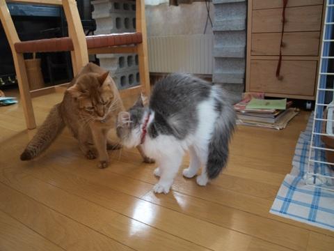 おねーにゃんと(2009.03.01)