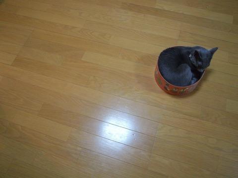 まる(2009.10.27)