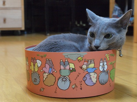 カップケーキ?(2009.10.27)