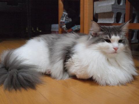 フツーのフレイヤ(2009.11.02)