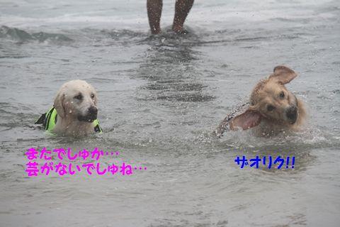 20110901_19_R.jpg