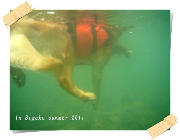 水中から2