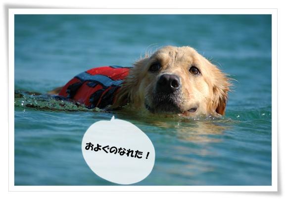 泳ぐのなれた