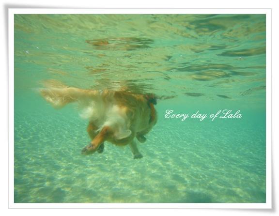 水中より泳ぐ姿