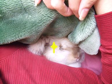 添い寝 見つかった!