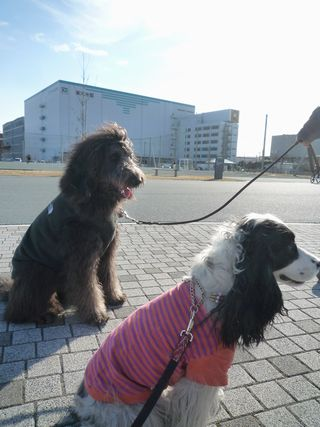 blogpictures10 217