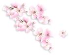 image sakura-hanamiic2