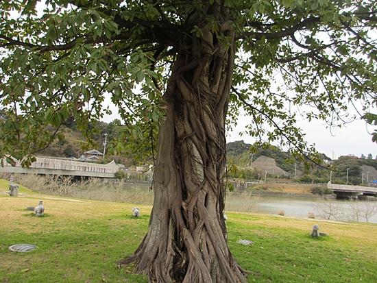 木  古い木