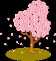 image k  sakura cherry2