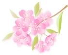 image k sakura-100219-ic1