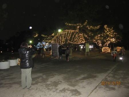 大濠公園イルミ1