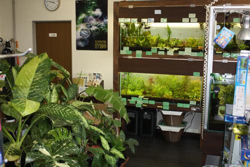店内の様子 東海 岐阜 熱帯魚 水草 観葉植物販売 Grow aquarium