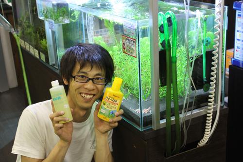 これを使えばレッドビーが殖えると言っています。 東海 岐阜 熱帯魚 水草 観葉植物販売 Grow aquarium