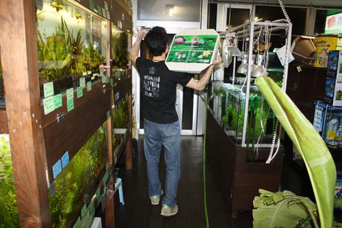 泥棒ではありません。ただの出たがりですw 東海 岐阜 熱帯魚 水草 観葉植物販売 Grow aquarium