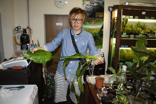 エキノドルス アルトネグロ 東海 岐阜 熱帯魚 水草 観葉植物販売 Grow aquarium