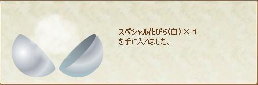 6回目花びら白