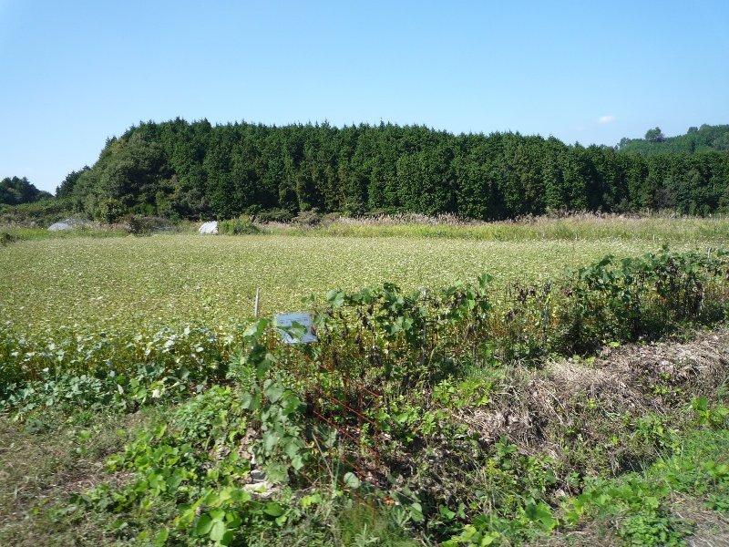 20091004_笠そば-16