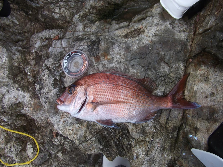 小松島 真鯛30UP