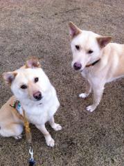 ソラ(左)とハク(右)