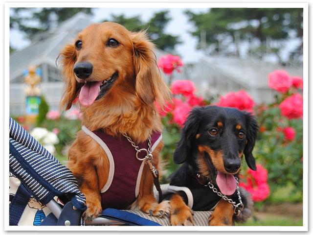 群馬散策☆敷島公園