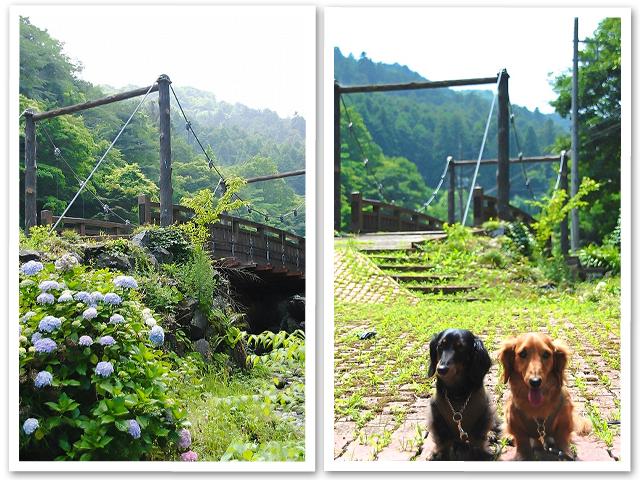 紫陽花☆ゆずの散歩道