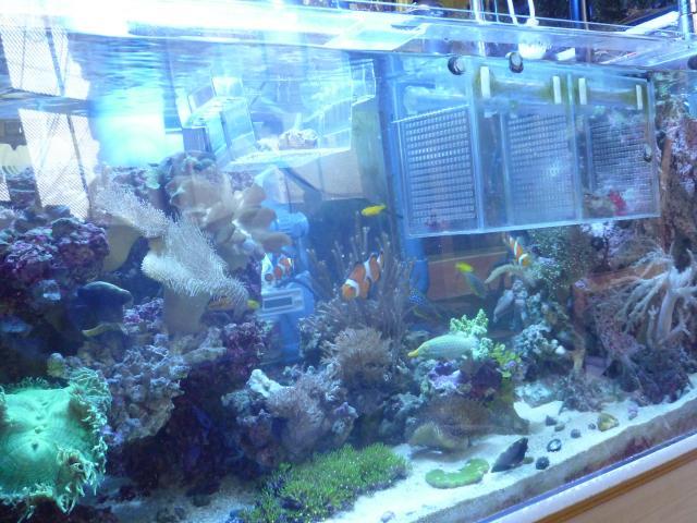今現在 水槽前景と魚たち♪