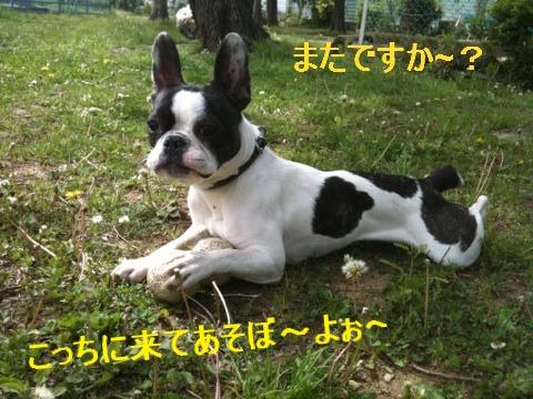 4_20110510152459.jpg