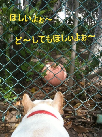 5_20110510152458.jpg