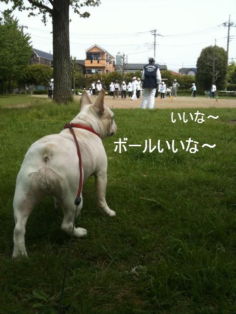 6_20110510154227.jpg