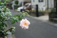 薔薇の道標