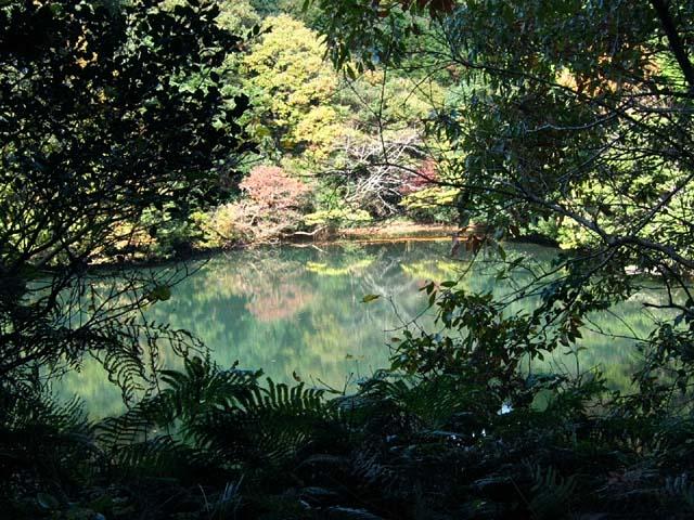湖面紅葉(102954 byte)