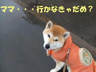 お散歩雨2