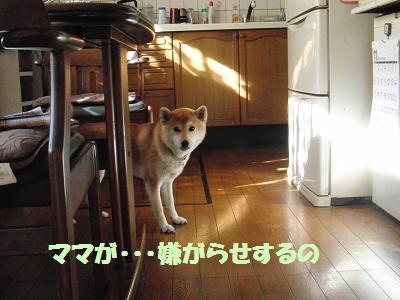 CIMG0154.jpg