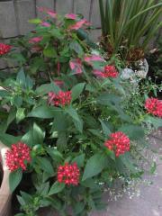 夏の寄せ植え2009