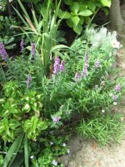 夏の花壇2009