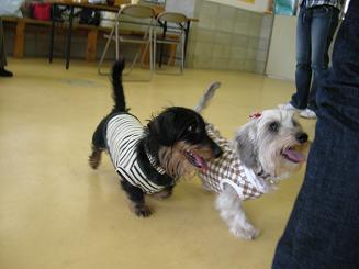 2009.10.25ログ&マシュ&ルーシー