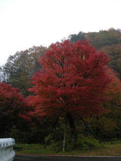 2009.11.1高山道の駅巡り 020