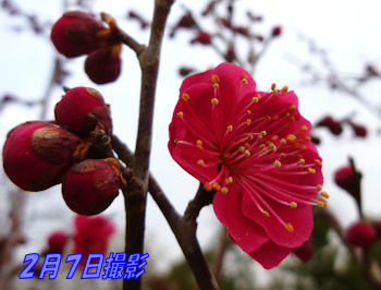 komugiokan_0303_004