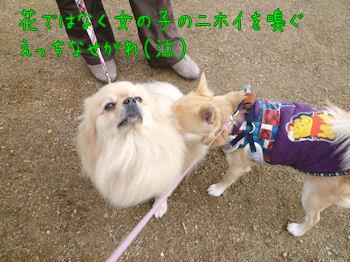 komugiokan_0303_008